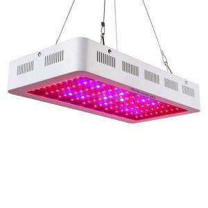 Crecimiento plantas LED